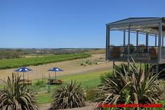 McLaren Flat - Vineyard (soyouz) Tags: aus australie geo:lat=3519983719 geo:lon=13861907734 geotagged mclarenflat southaustralia fleurieupeninsula vignes australiel
