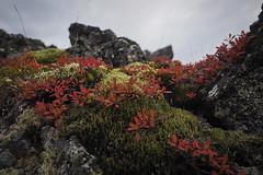 sept-1010416 (lebeaupinagnes) Tags: agneslebeaupin agnes lebeaupinagnes landscape myvatn automne mood north norduland northlife september iceland islande icelandic colours