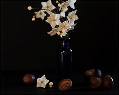 l'automne arrive  (JJ_REY) Tags: automne autumn nikon d700 55mm micronikkor naturemorte stilllife colmar france lumirenaturelle availablelight