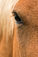 Horse portrait (digoarpi1) Tags: animal colt elegant eye field freedom gallop grass hair hairs horse horsemanship mare maroon nature parent peace rider shine tranquility