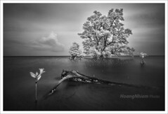 Vitality. (HoangtheNhiem) Tags: sea seascape reflection tree landscape island phuquoc