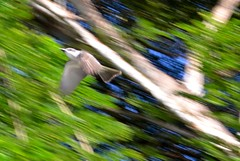 A Happy Accident (kelly.shea.o) Tags: blue trees sky blur green bird photo gray flight impressionism streaks streaky