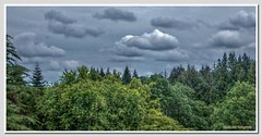 The Summer Sky (Glenda Hall) Tags: trees ireland summer sky green nature leaves clouds fuji july gimp finepix northernireland hdr forestpark downpour rainclouds 2012 tyrone shadesofgreen greyskies cookstown countytyrone exr flickraward drummanor f770 hdrluminance drumroad glendahall