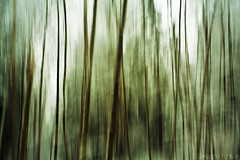 Long Exposure w/ Pan 1 (Adam.Yunker) Tags: trees abstract nature zeiss forest canon landscape 50mm long exposure mark ii carl 17 5d pan panning mmj