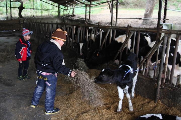 苗翔牧場(牛奶的故鄉)018