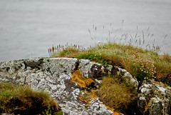 Scotland 2012 (. pihlaja) Tags: summer vacation lake holiday nature scotland moss lakes peat islay 2012