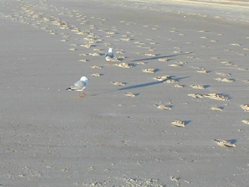 Beach Gold Coast - 9