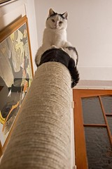 Now that's what I call a scratching post! (eyesore9) Tags: cat feline shaggy looming jumbo toulouselautrec scratchingpost divanjaponais sccgal