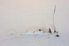 Winter Mini-Landscape (Scottwdw) Tags: winter plants snow newyork cold texture creek landscape nikon mini falls dried ithaca minimalist d700 yourphototips scottthomasphotography afsnikkor28300mmf3556gedvr
