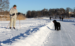 Connection (ninasthlm) Tags: winter ice is hagaparken brunnsviken portuguesewaterdog winterinstockholm portugisiskvattenhund