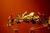 wreath. (moloko-vell0cet) Tags: red toronto ontario museum photoshop canon lens greek rebel gold head royal wreath kit xs artifact rom canda cs5