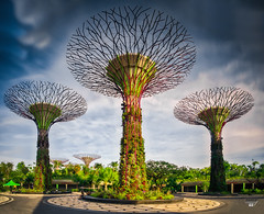 Amongst The SuperTree (Scholesville) Tags: longexposure trees light gardens modern singapore shadows treasure parks structures artificial slowshutter getty greenery gettyimages architectures greencity nparks gbtb supertrees gardenbythebay quackdamnyou scholesville