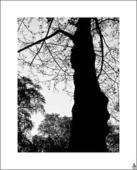 rbol silueteado / Silhouetted tree (A. Jimnez) Tags: b bw espaa alex contraluz arbol j bn silueta belmonte albacete ramas jimnez a trayo