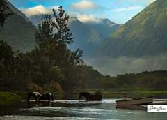 welcome to waipio (SARA LEE) Tags: horses mountains river hawaii boat paradise crossing valley serene bigisland idyllic rivercrossing waipio waipiovalley hamakuacoast sarahlee hisarahlee