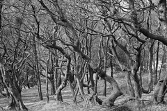 Tangled Woods (Rovers number 9) Tags: trees england march woods minolta sony lancashire a65 2013 sonya65 mar2013