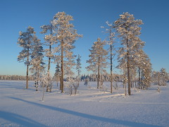 130209_Lappland_48