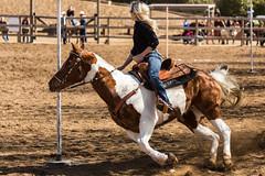 Acton Rangers Gymkhana (Schoonmaker III) Tags: horse paint blonde poles equestrian gymkhana actonrangersgymkhana