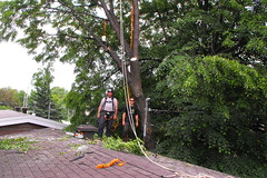lagage , abattage (Joel Gauthier) Tags: wood tree truck bucket cut chainsaw down rope knot arbres chipper trimming removal arbre rigging carabiner chaine corde arborist stihl cordage abattage scie lagage ms200 mondage