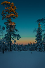 The golden hour (Explored) (Tore Thiis Fjeld) Tags: winter light sunset sky snow cold color tree nature oslo norway forest twilight samsung lillomarka explored nx210