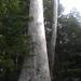 HTC Radar 4G_001922