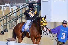 2013-02-21 (54) r7 Grant Whitacre on #3 Anita Job (JLeeFleenor) Tags: horses caballo cheval photography photos uma cal jockey jinete cavallo cavalo pferd equestrian kuda alogo equine hest thoroughbreds soos hevonen cuddy paard cavall kon koin laurelpark  jokey fantino hst ceffyl  jquei  ko faras hestur  perd ngi  konj    capall beygir yarraman dokej rennreiter  pfeerd grantwhitacre   okej kilparatsastaja jocheu