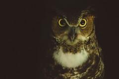 Up All Night (calebboz) Tags: owls vsco night animal wildlife owl