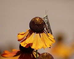 insectos y flores....flowers & insects (georgina e.s) Tags: bellevuebotanicalgarden seattle unitedstates