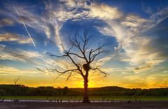 Eagle Tree Outline (Kansas Poetry (Patrick)) Tags: eaglesnest eagle eaglenest kansas clintonlake stull stullkansas lawrencekansas patrickemerson patricklovesnancy