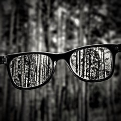 Forest and glasses (sergeylebedev141) Tags: glasses forest tree trees blackandwhitephotography blackandwhite