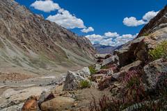 De roches et de fleurs... (Dolkar-photographe...) Tags: roches fleurs himalaya montagnes paysage landscape umasilatrek 2016 inde bouddhisme karsha paldar trek zanskar t2016