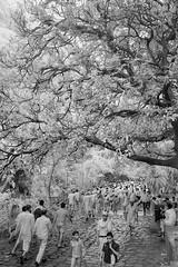ADS_0000110086 (dickysingh) Tags: ranthambore ranthambhore hindu festival