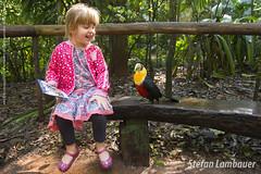 Catharina e o tucano (Stefan Lambauer) Tags: fozdoigua catharina kid criana menina tucanodobicoverde parquedasaves birds tourism turismo parquenacionaldoigua stefanlambauer 2016 brasil brazil paran br