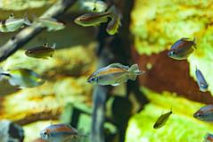Acuario Agosto 2016 (07) (Fernando Soguero) Tags: acuario zaragoza acuariodezaragoza aragn turismo aquarium nikon d5000 fsoguero fernandosoguero