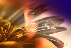 ''En uzun sren sevdalar, yarm kalanlardr.'' /Cemal Sreya/  #photography #women #face #edit #art #collage #flower #picture #mask #shapemask #colors #dream #fantastic #portrait #beautiful #artwork #freeart #photodesign #edited #illustration #poster #peo (mrbrooks2016) Tags: illustration beautiful face mask dream artwork art edit fantastic artpeoplegallery stepbystep shapemask freeart picture collage editedphoto flower photography edited photodesign colors portrait poster stepbystepme editedstepbystep women artpeople people