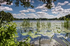 Lilies of the Lake (Carl Yeates) Tags: canon550d lake clouds blue water ellesmere park
