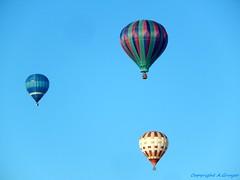Tree balloons (FleurdeLotus28) Tags: balloon mongolfire colors couleurs chartres mongolfiades sky ciel air france nikon
