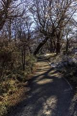 Lago Grey (Medigore) Tags: chile tree forest cielo medigore canont3i aire libre serenidad campo paisaje montaas ngc montaa nubes azul landscape cima ladera rbol planta