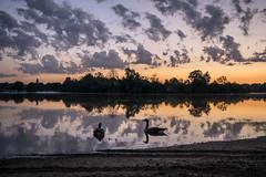 Sunrise-cygne25-09-16_0266 (jocelynengi) Tags: fog sunrise