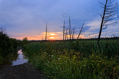 At McArton's End (Anvilcloud) Tags: mcartonroad carletonplace morning deadtrees sunrise wildflowers