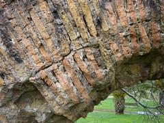DSC06158 (B J F I) Tags: park italien roma italia ruin rom vatten tegel valv gräs akvedukt murning diopadremisericordioso båge murverk valvbåge vattenförsörjning