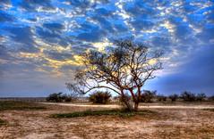 Still standing (SAUD ALRSHIAD) Tags: trees light sunset shadow sky sun tree sahara nature lines stone landscape nikon exposure shot tag explorer ngc saudi arabia sands riyadh hdr landscap ksa saud saudia riydh     arabin d7000  nikonflickraward alrshiad