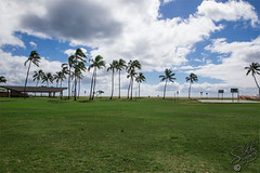 140886_Jan13_X80P8489 (ab_shooter) Tags: grass hawaii palmtree ewabeach ewabeachpark