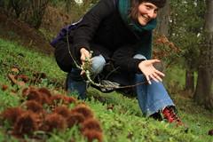 bem picadinho! hihihi (LetsLetsLets) Tags: sãopedrodosul portugal dezembro 2012 ouriços castanhas marrons