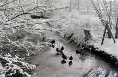 dutch winter (43) (bertknot) Tags: winter dutchwinter dewinter winterinholland winterinthenetherlands hollandsewinter winterinnederlanddutchwinter