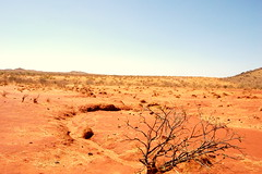 The Results of Overgrazing - Sudan (UNEP Disasters & Conflicts) Tags: africa sudan training environment climatechange drought desert conflict disaster peace development water unep unenvironment