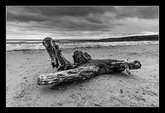 Driftwood at Sand Bay (Travels with a dog and a Camera :)) Tags: uk england bw southwest west monochrome digital photoshop bristol walking mono bay dc sand pentax unitedkingdom south north sigma somerset coastal 1020mm channel febuary 43 k5 northsomerset lightroom bristolchannel cs6 sandbay 2013 1456 kewstoke justpentax sigma1020mm1456dc pentaxk5 photoshopcs6 lightroom43