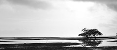 It's time to fly, farewell Australia for now (7/52) (eddieELM) Tags: trees light sea blackandwhite bw white black reflection tree beach nature water beautiful sunrise canon reflections eos coast naturallight australia brisbane queensland 52 nudgee 600d nudgeebeach 2013 canoneos600d