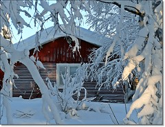 A red house in a white world (HJsfoto) Tags: winter snow barn vinter sn lada musictomyeyes svast mywinners