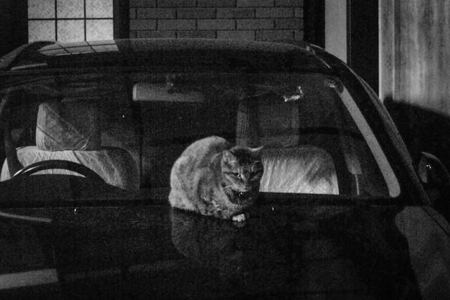 Today's Cat@2013-02-14