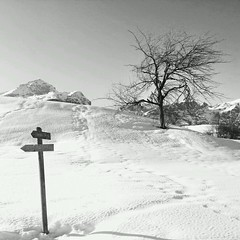 Winter... (marcomenk) Tags: winter blackandwhite bw italy snow mountains tree samsung andalo picsaypro snapseed flickrandroidapp:filter=none galaxynote2